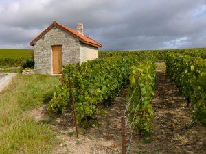 Photographie : extérieur jour, une cabane au milieu des vignes