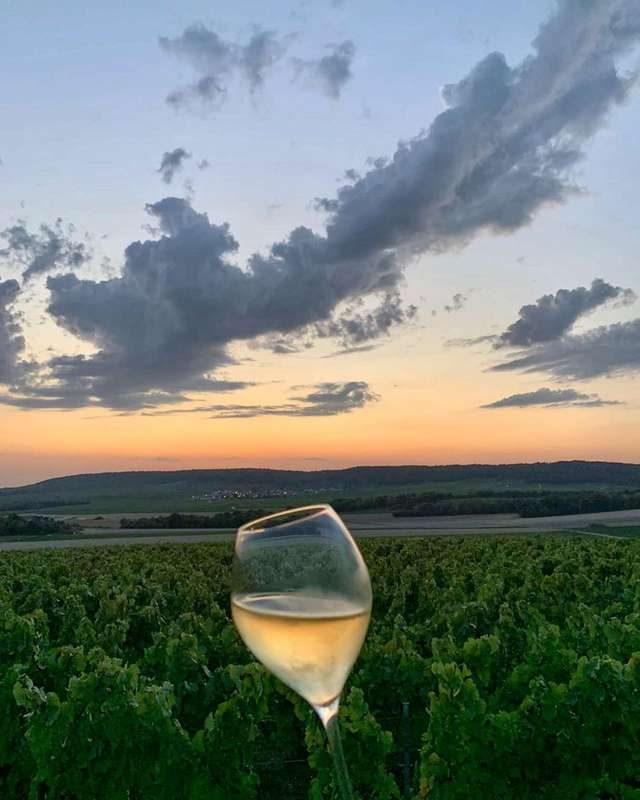 Extérieur, soir. Photographie d'une coupe de Champagne en gros plan, au second plan des vignes, en arrière plan la montagne de Reims