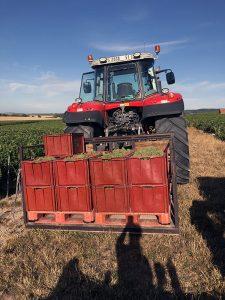 Extérieur. Photographie. Un tracteur vu de dos, qui transporte 9 caisses de raisins blancs vendangés.