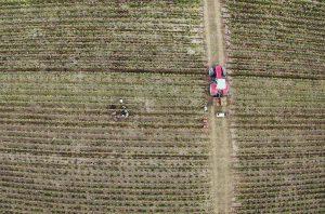 Extérieur. Photographie aérienne (vue drone ?) de plants de vignes, avec des vendangeurs au travail. Il y a également un chemin avec un tracteur